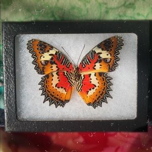 REAL FRAMED BUTTERFLY ~ CRUELTY FREE